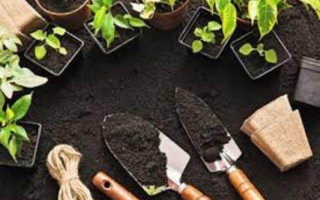 Ứng Dụng Sodium Molybdate 2 Hydrate Trong Làm Vườn