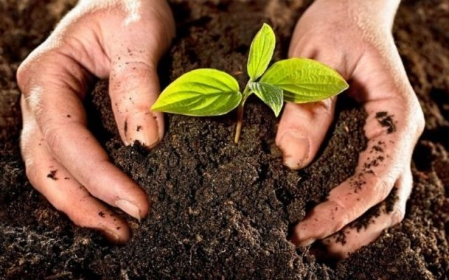 Potassium Humate 50-55% Giúp Cải Thiện Đất Trồng