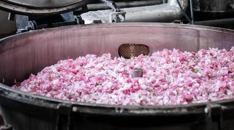 Hoa Hồng Rosa Được Cho Vào Khay Kim Loại