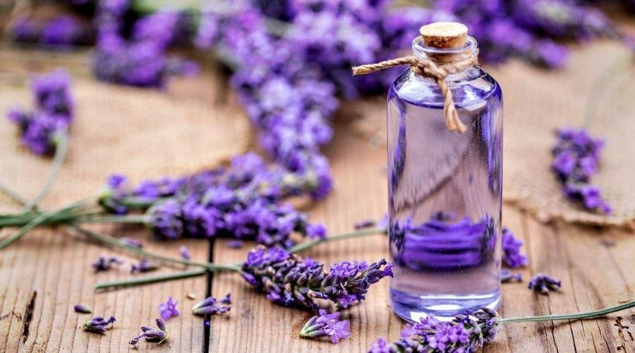Mùi Hoa Oải Hương Có Tác Dụng Gì? - Công Dụng Đối Với Hệ Thần Kinh